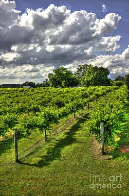 The Vineyard  Art Print by Reid Callaway
