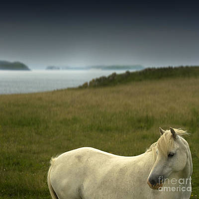 Kitchen Collection - The Welsh Pony  by Angel Ciesniarska