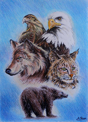 Animals Drawings - The Wildlife Collection 1  by Andrew Read