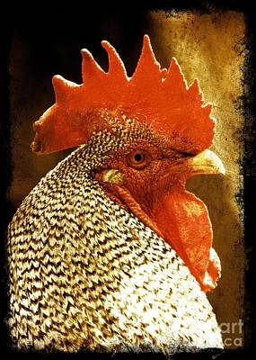 Photograph - The Wise Old Rooster by Carol Groenen