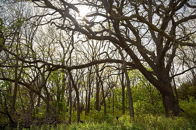 Photograph - The Woods by Ryan Heffron