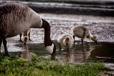 Photograph - Family Outing by Jeff Folger