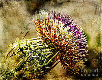 Photograph - Thistle by Barbara Youngleson