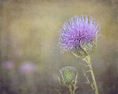 Photograph - Thistle by Carol Erikson