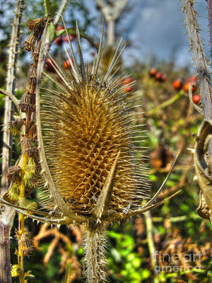Photograph - Thistle On Sunny Autumn Day by Nina Ficur Feenan