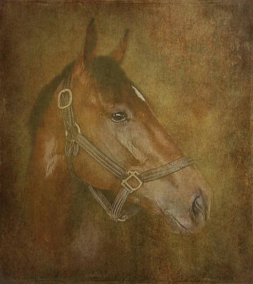 Bay Thoroughbred Photograph - Thoroughbred by Angie Vogel