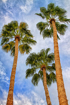 Featured Images Photograph - Three Palms Palm Springs by William Dey