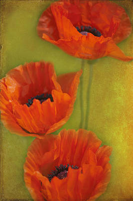 Three Poppies Art Print