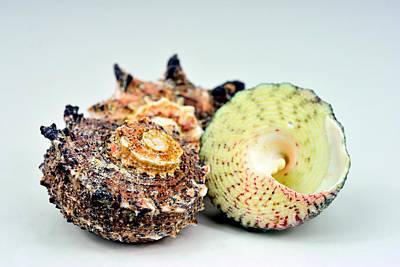 Three Shells Original