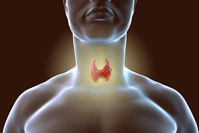 Thyroid Gland Art Print by Kateryna Kon/science Photo Library