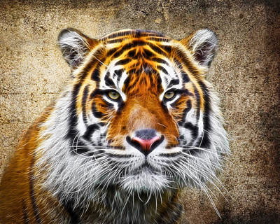 Tiger Fractal Photograph - Tiger Face by Steve McKinzie