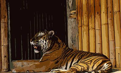 Tiger In Captivity Art Print by Anthony Dalton
