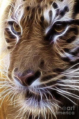 Tiger  Print by Tilly Williams