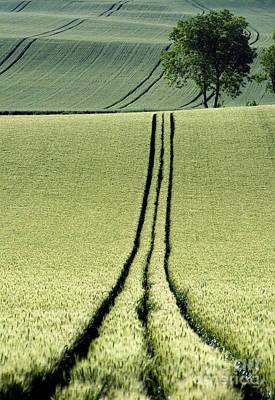 Cornfield Photograph - Tire Tracks In A Wheat Field. Auvergne. France. by Bernard Jaubert