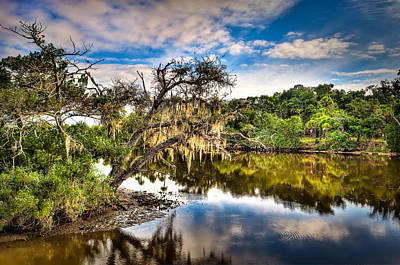 Photograph - Tomoka Oaks by Brent Craft