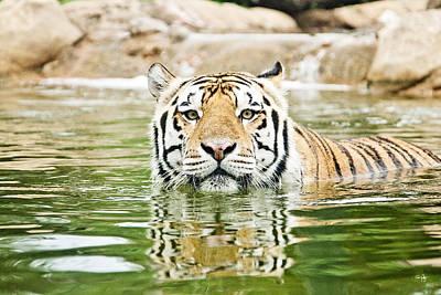 South Louisiana Photograph - Top Cat by Scott Pellegrin