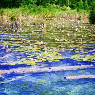Aquatic Digital Art - Torch River Water Lilies by Michelle Calkins