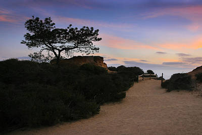 Torrey Pines Trail Art Print by Scott Cunningham