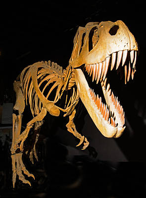 Photograph - Torvosaurus Tanneri Dinosaur by Millard H. Sharp
