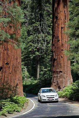 Tourism In Sequoia National Park Art Print