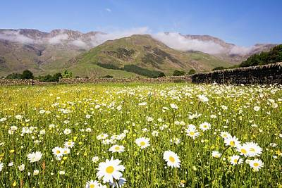 Harrison Photograph - Traditional Hay Meadows by Ashley Cooper