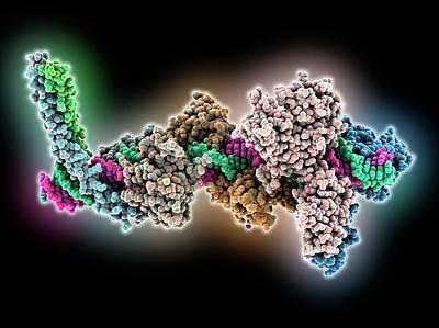 Transcription Activation Of Ifn-beta Gene Print by Laguna Design