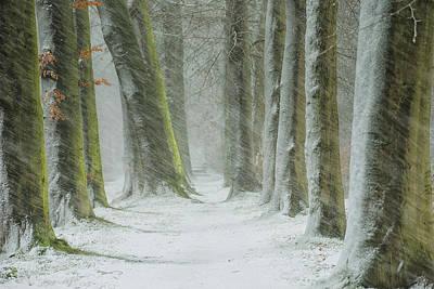 Snowfall Wall Art - Photograph - Transformation by Saskia Dingemans