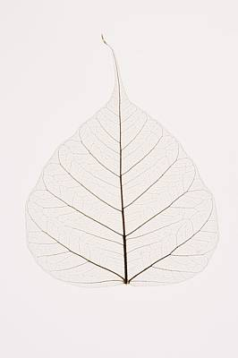 Transparent Leaf Art Print by Kelly Redinger