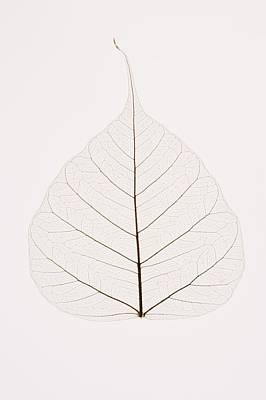 Transparent Leaf Print by Kelly Redinger