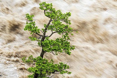 Tree And River In Flood, Banff Art Print