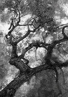 Cal Bear Photograph - Tree At Berkeley by Ron Regalado