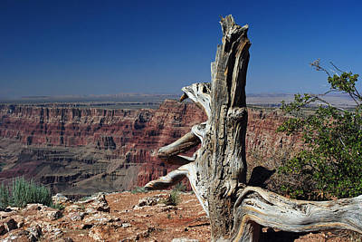 Photograph - Tree At Grand Canyon by Robert  Moss