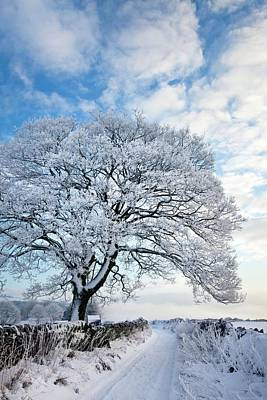 Hoar Frost Photograph - Tree Covered In Hoar Frost by Alex Hyde