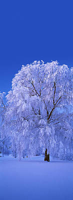 Cold Temperature Photograph - Tree Covered With Snow, Imatra, South by Panoramic Images