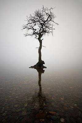 Milarrochy Bay Photograph - Tree by Grant Glendinning