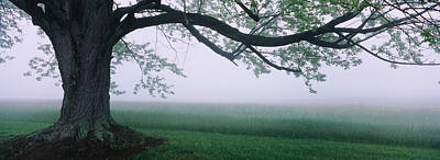Tree In A Farm, Knox Farm State Park Art Print by Panoramic Images