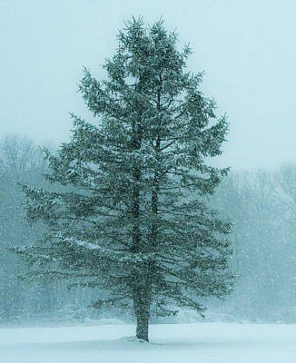 Classic Golf - Tree in a Snow Storm by Steven Natanson