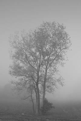 Tree In Morning Fog Art Print by Eje Gustafsson