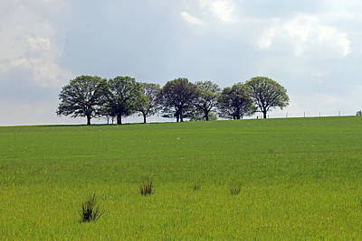 Photograph - Tree Line by Tony Murtagh