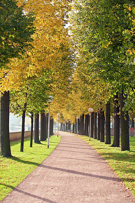 Dresden Wall Art - Photograph - Tree-lined Pathway Along Elbe River by Michael Defreitas