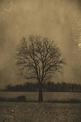 Tree Of Life Art Print by Dan Sproul