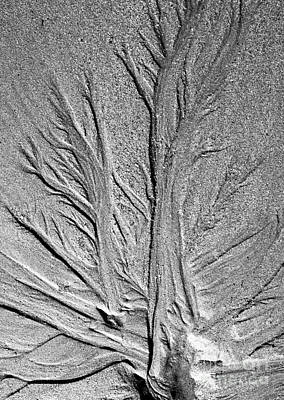Photograph - Tree Of Life by Glenn Gordon
