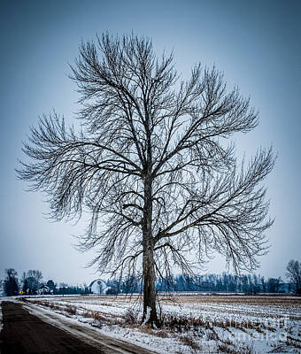 Photograph - Tree by Ronald Grogan