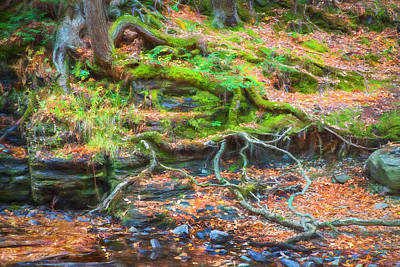 Photograph - Tree Roots George W Childs National Park Painted   by Rich Franco