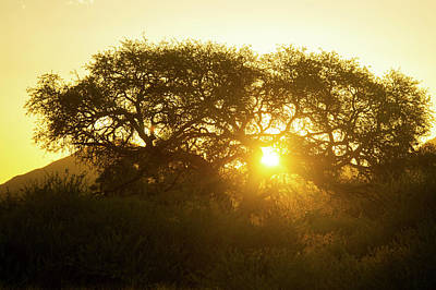 The Great Escape Photograph - Tree Silhouetted By The Sun At Dusk by Remsberg Inc