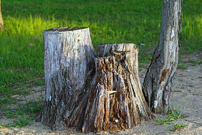 Tree Stump Art Print