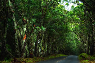 Photograph - Tree Tunnel by Harry Spitz