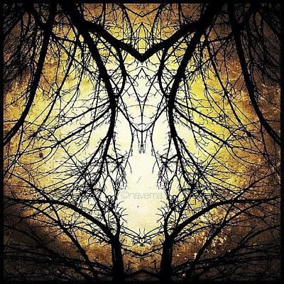 Pattern Photograph - Tree Veins by Natasha Marco
