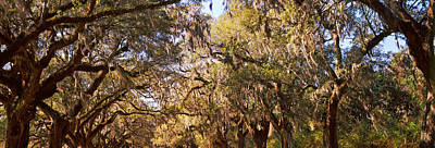 Mount Pleasant Photograph - Trees Covered With Spanish Moss, Boone by Panoramic Images