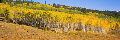 Woods.hills Photograph - Trees In A Field, Dallas Divide, San by Panoramic Images